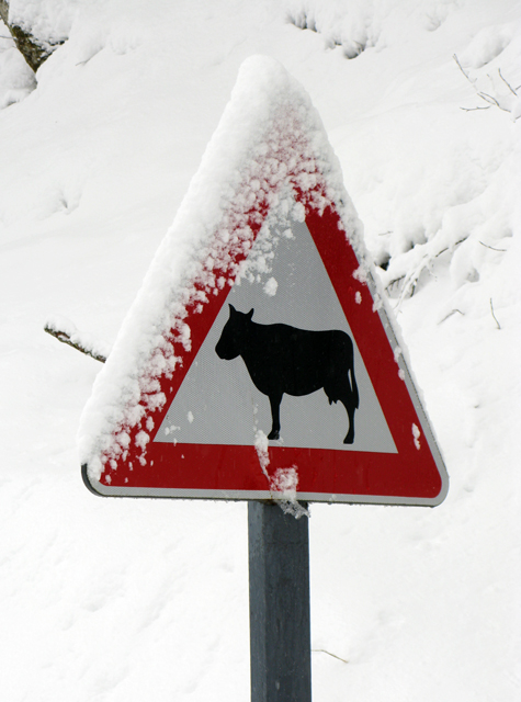 snow, warning sign, kate bailward