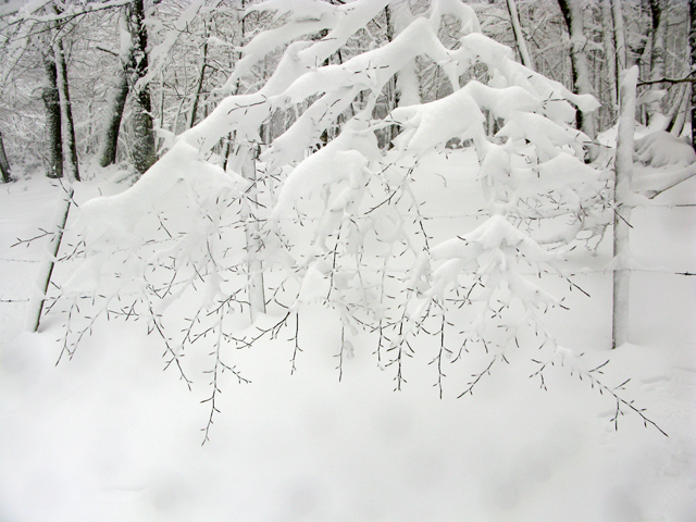 snow, branches, kate bailward