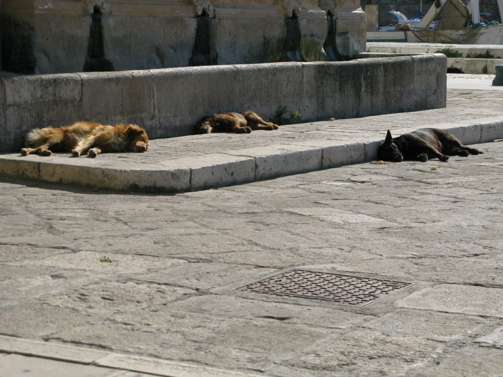 dogs, salento, gallipoli, italy, kate bailward
